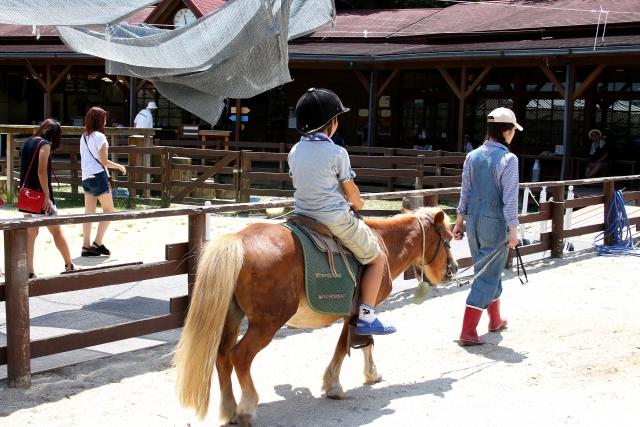 旅行に行くの飽きた 乗馬体験をしてみて